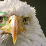 EM1x and new firmware 2.0 operation for birds in flight