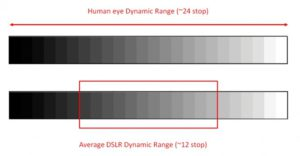 Dynamic Range on Olympus vs Sony cameras for birds in flight