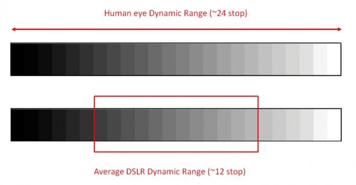 Dynamic Range on Olympus vs Sony cameras for birds in flight