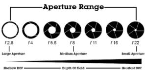 Depth of field  for birds in flight – good or bad?