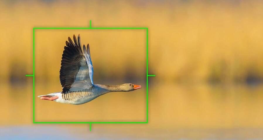 New EM1x firmware 2.0 focus tests for Birds in Flight